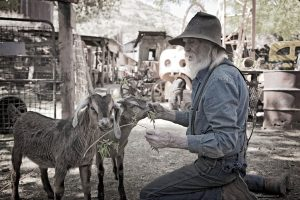 don robertson hand feeds some baby goats