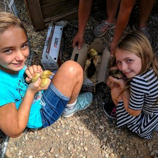 two young girls holding baby chicks in the petting zoo