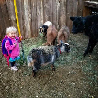 a young girl with a rake in her hand in the petting zoo
